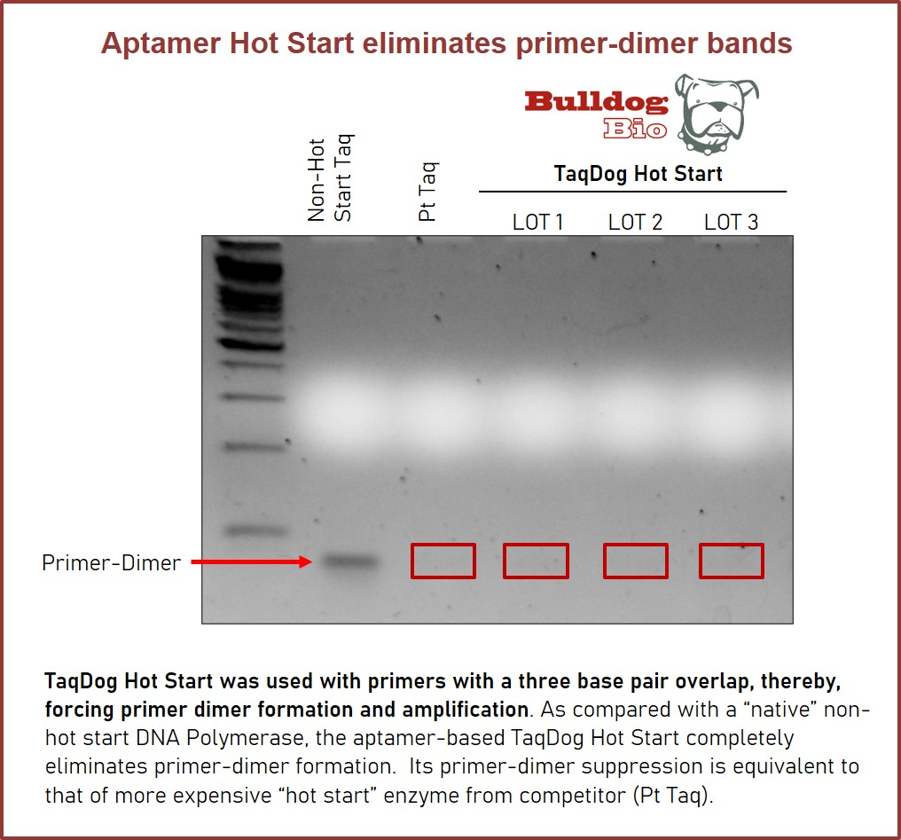 Aptamer Hot Start Eliminates primer-dimer bands